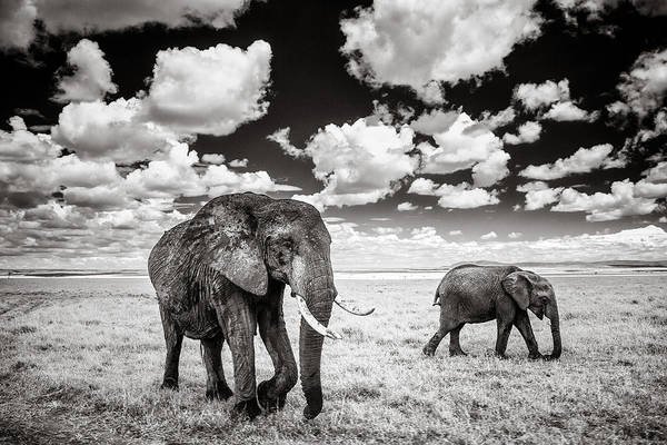 Strolling Photograph - Elephants And Clouds by Mike Gaudaur