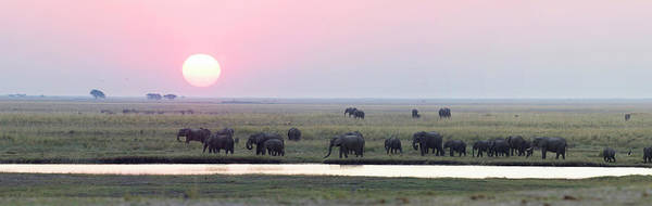 Wall Art - Photograph - Elephants At Chobe Game Reserve by Hphimagelibrary