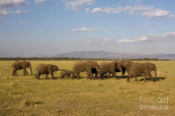 Photograph - Elephants At Lake Manyara by Chris Scroggins