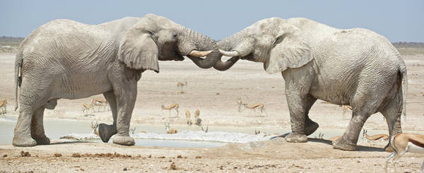 Wall Art - Photograph - Elephants Drink Water At The Okaukuejo by Marc Pagani