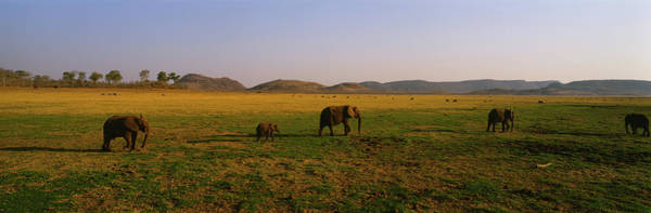 Wall Art - Photograph - Elephants Grazing In A Field, Lake by Animal Images