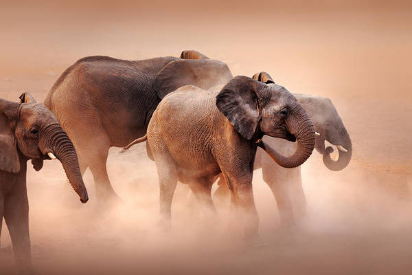 Dusty Photograph - Elephants In Dust by Johan Swanepoel