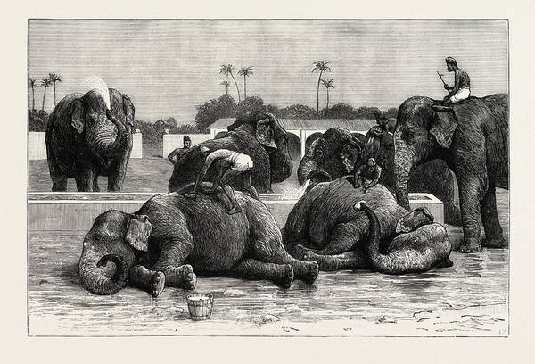 Wall Art - Drawing - Elephants In India, The Morning Bath Before Breakfast by English School