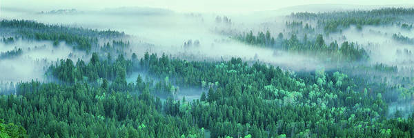 Wall Art - Photograph - Elevated View Of Fog Over A Forest by Panoramic Images