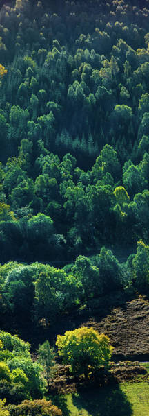 Wall Art - Photograph - Elevated View Of Trees, Loch Tummel by Panoramic Images