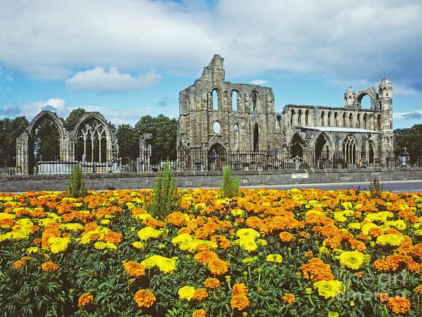 Photograph - Elgin Cathedral - Scotland by Phil Banks