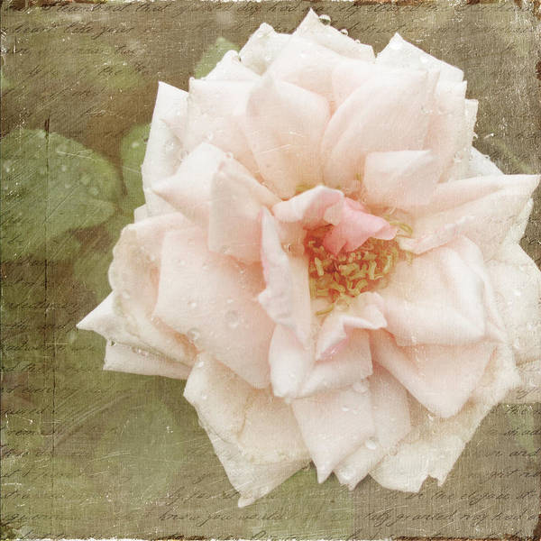 Photograph - Elie Beauvillain Rose Textured Art by Renee Hong