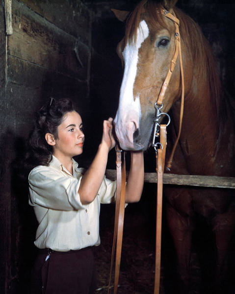 Wall Art - Photograph - Elizabeth Taylor In National Velvet  by Silver Screen