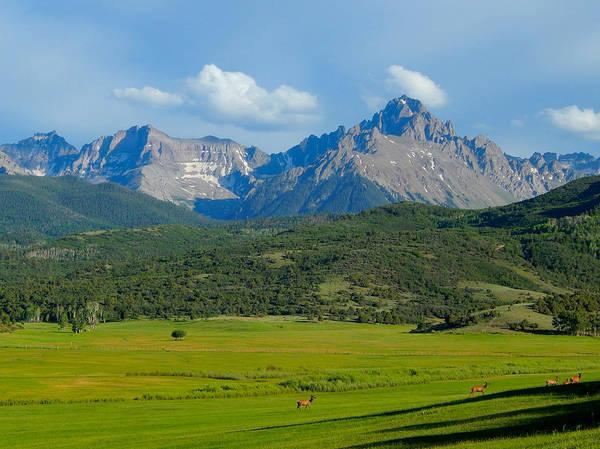Photograph - Elk Below Mount Sneffels by Dan Miller