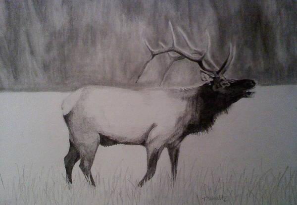 Bugling Drawing - Elk Bugling by Tabitha Schultz