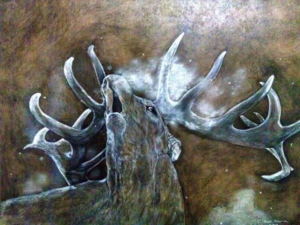 Bugling Drawing - Elk Bugling by Zelda Van der linde