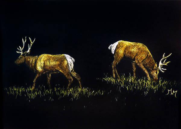 Elk Bulls Art Print