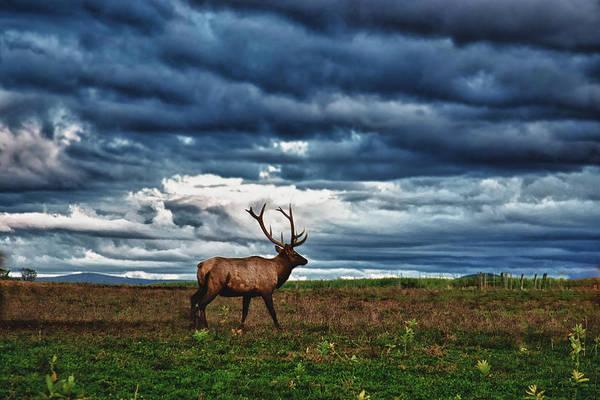 Photograph - Elk In Field by Jeff Folger