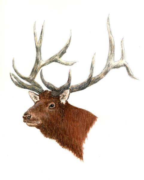 Wall Art - Painting - Elk - Male  by Michael Vigliotti