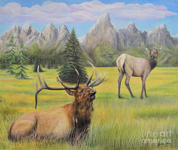 Evergreen Trees Drawing - Elk Of The Grand Tetans by Kassia Ott