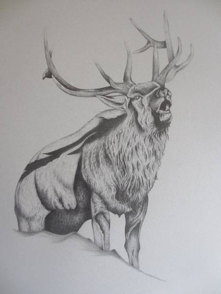 Elk Mountain Drawing - Elk  by Pete  Garcia