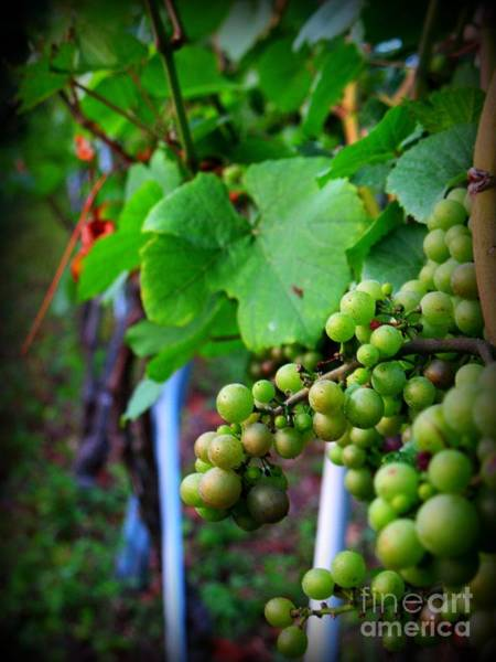 Photograph - Vineyard 2 by Patti Whitten
