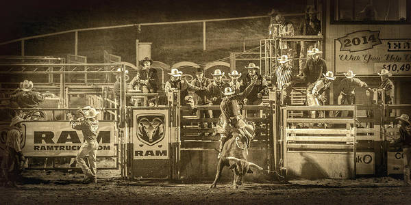 Wall Art - Photograph - Elks Rodeo - 2014 by Caitlyn  Grasso