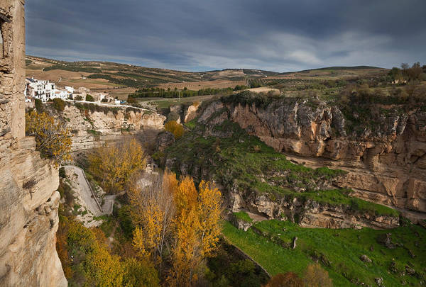 Elm Tree Photograph - Elm Trees In Autumn In The Tajo Or by Panoramic Images