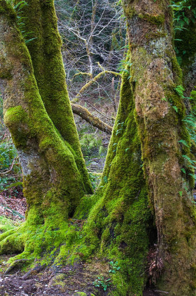 Nikon D5000 Photograph - Emerald Forest by Tikvah's Hope