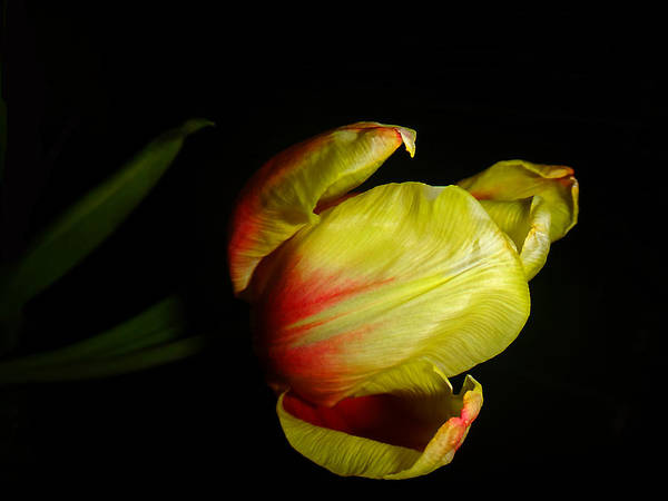 Photograph - Emerging From Darkness by Beth Akerman
