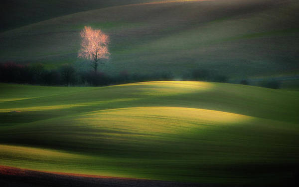 Shrubs Photograph - Emerging From Dawn by Marek Boguszak