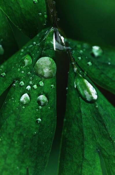 Raindrops Photograph - Emerald Rain by Susan Capuano