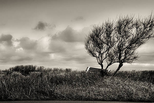 Photograph - Empty Bench Naked Trees by Bob Orsillo
