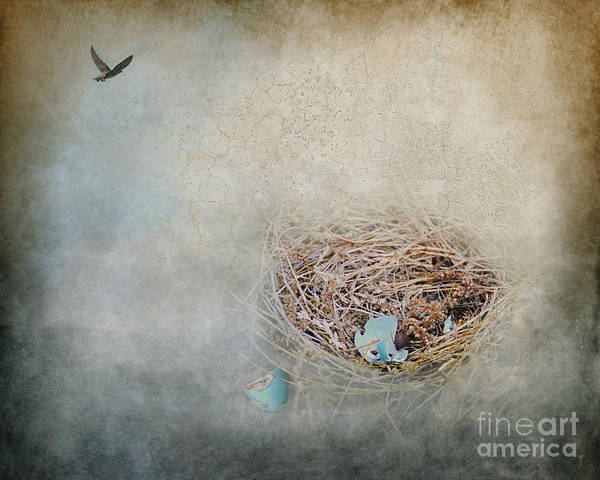 Empty Nest Wall Art - Photograph - Empty Nest by Jai Johnson