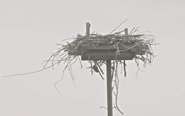 Empty Nest Wall Art - Photograph - Empty Nest by Mark Holden