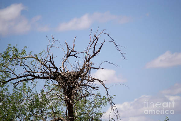Empty Nest Wall Art - Photograph - Empty Nest Syndrome by Beverly Guilliams