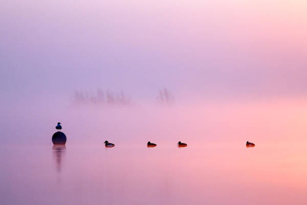 Bird Photograph - Empty Spaces 2 - Sunrise In The Mist by Roeselien Raimond