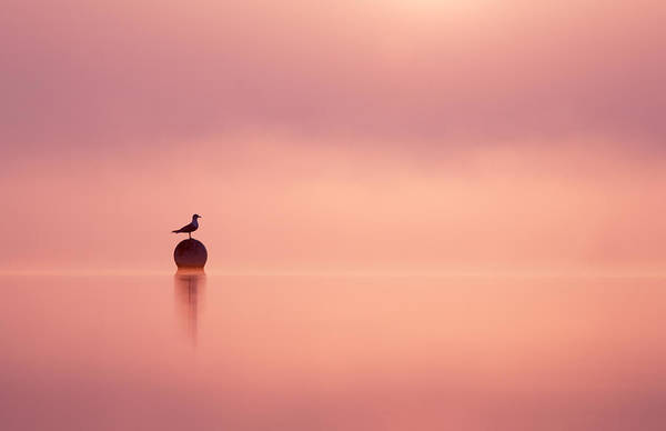 Wildfowl Photograph - Empty Spaces by Roeselien Raimond