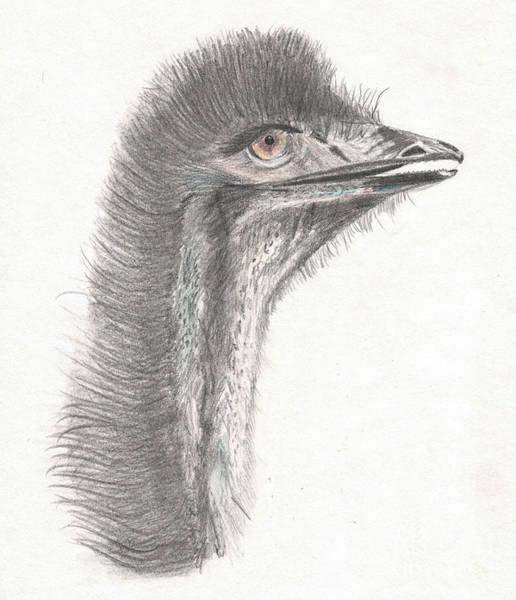 Drawing - Emu Eyes by Barefoot Bodeez Art