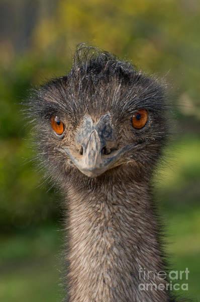 Photograph - Emu Portrait by Anthony Mercieca