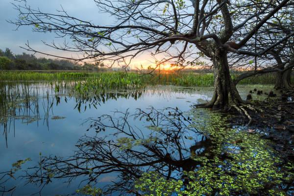 Cypress Knees Photograph - Enchanted by Debra and Dave Vanderlaan