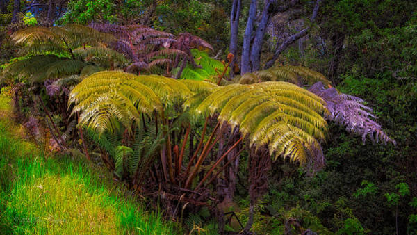 Photograph - Enchanted Fern by Jim Thompson