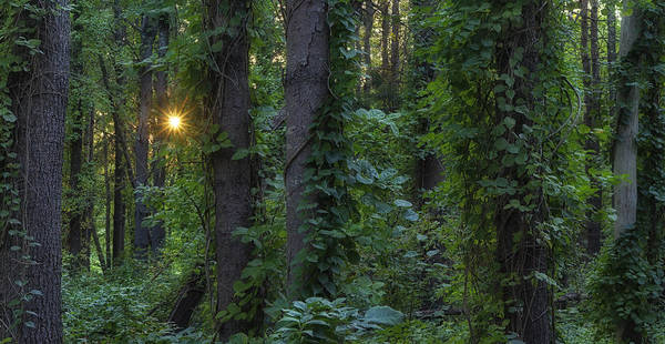 Photograph - Enchanted Forest by Darylann Leonard Photography
