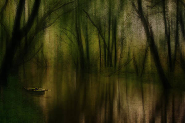 Digital Art - Enchanted Forest by Eduardo Tavares