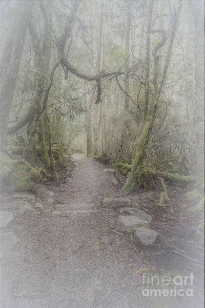 Photograph - Enchanted Forest by Elaine Teague