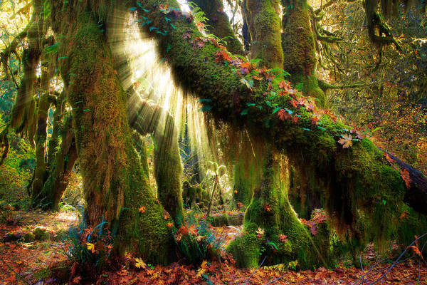 Mossy Wall Art - Photograph - Enchanted Forest by Inge Johnsson