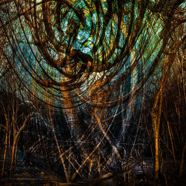 Photograph - Enchanted Forest  by Michael Arend