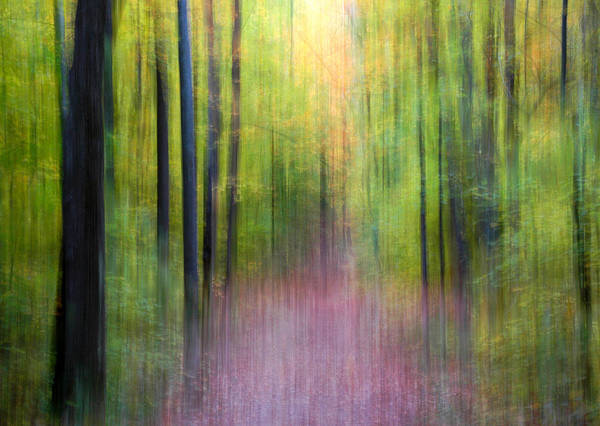 Photograph - Enchanted Forest by Rob Huntley