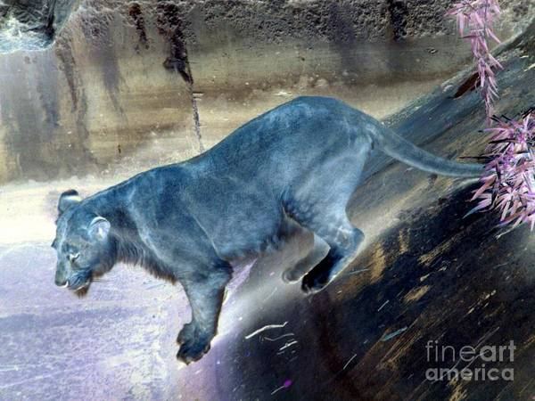 Wall Art - Photograph - Enchanted Lioness by Joseph Baril