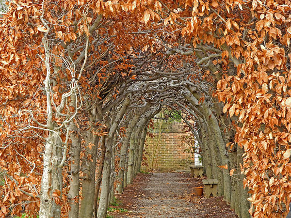 Photograph - Enchanted Path by Lynda Lehmann