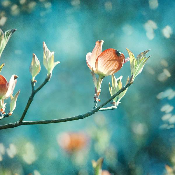 Wall Art - Photograph - Enchanting by Carolyn Cochrane