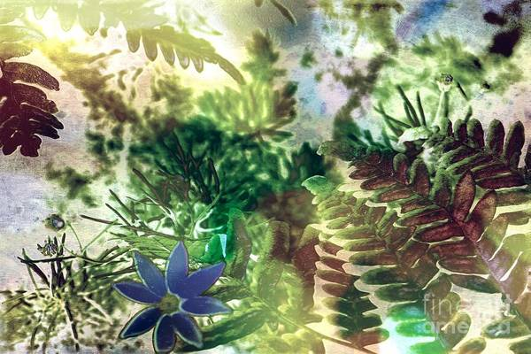 Photograph - Enchanting Fern by Denise Tomasura