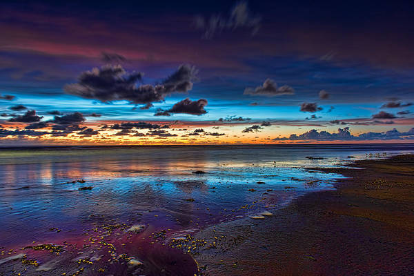 Photograph - Enchanting by Mark Whitt