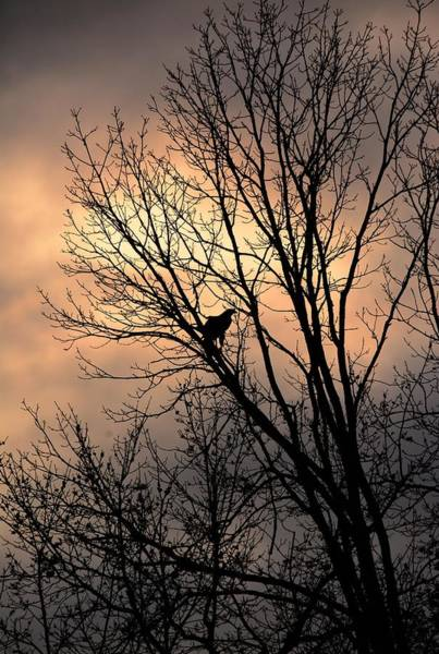 End Of The Day  Red Tailed Hawk Art Print