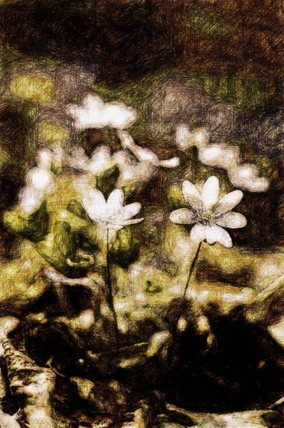 Snowdrop Painting - Endgraving Forest 16 by Yevgeni Kacnelson